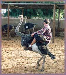 Highgate_Ostrich_Riding_Farm_Tour