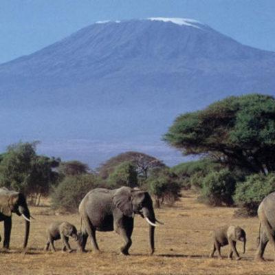 NATS_Serengeti_E_4b2a2841a791f