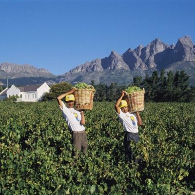 Cape Winelands Half Day Tour
