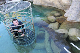 Crocodile cage diving in South Africa with Absolute Adventures