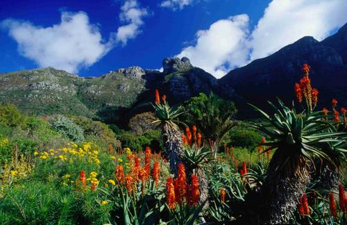 Outeniqua Mountains on the Garden Route South Africa