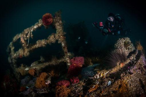 Wreck scuba diving Cape Town